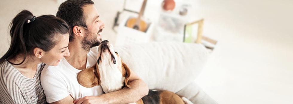 hundehalterhaftpflicht online berechnen abschlie en. Black Bedroom Furniture Sets. Home Design Ideas